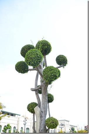 大皇宫-榕树